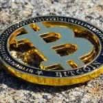 BitcoinChampionpa Profile Picture