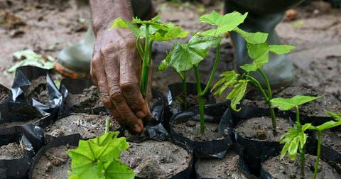 Ghana should plant 5 million trees in a single day - EweGhana.Net   Eweghana.com
